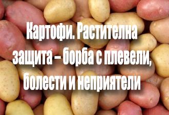 Картофи.-Растителна-защита-–-борба-с-плевели,-болести-и-неприятели