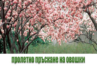 пролетно-пръскане-на-овошки