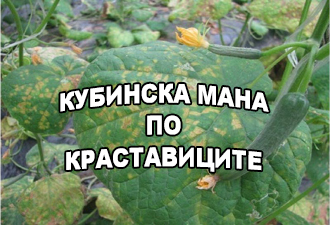 КУБИНСКА-МАНА-ПО-КРАСТАВИЦИТЕ